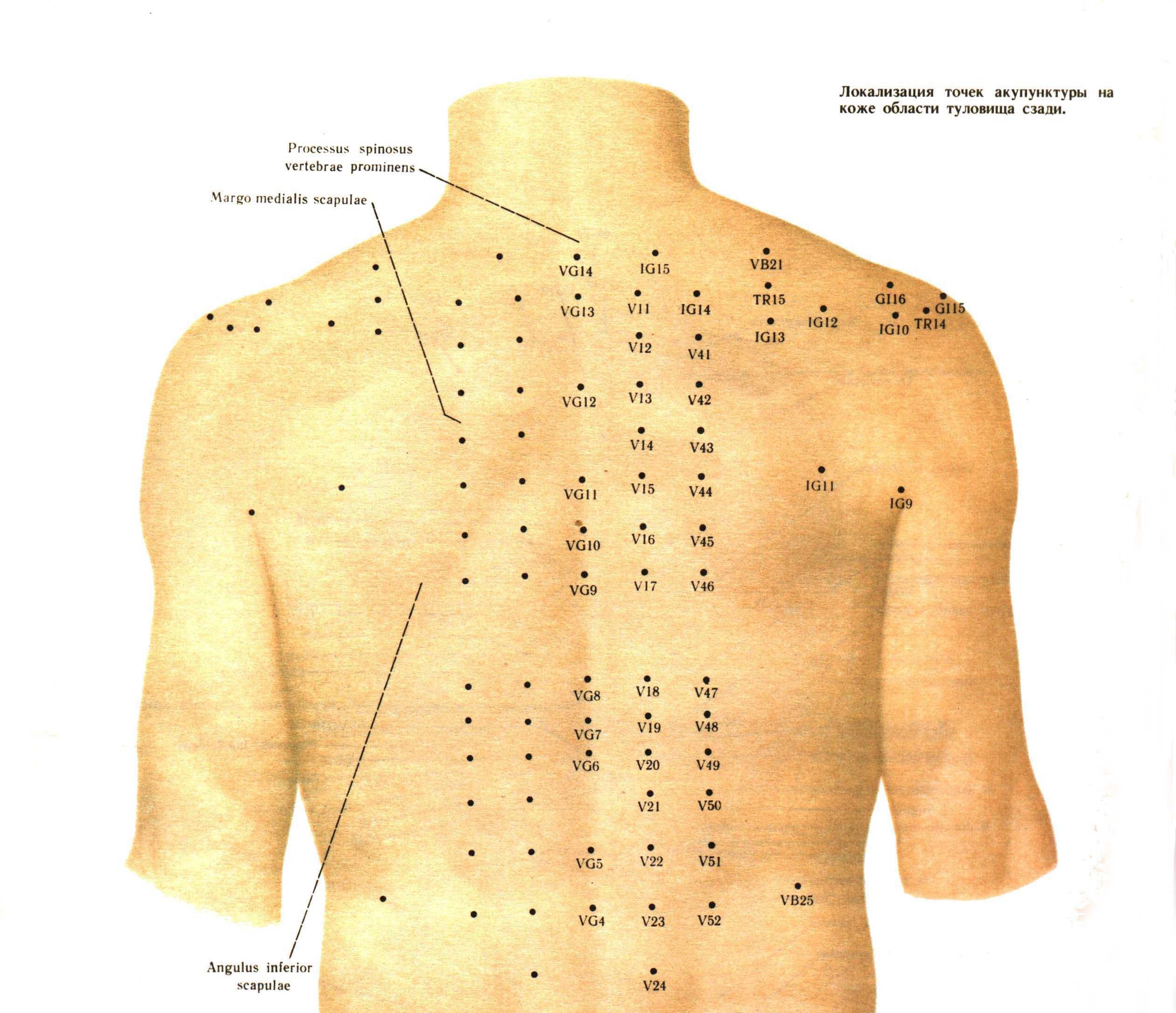 Точки на спине для массажа от боли 167