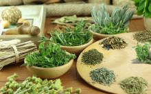 Травы для похудения